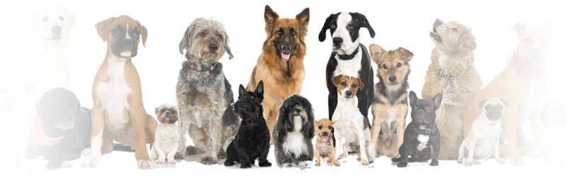 We love all dog breeds and breeders!