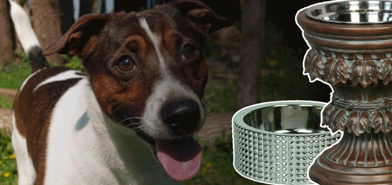 Designer Dog Bowls Luxury Food Water Station