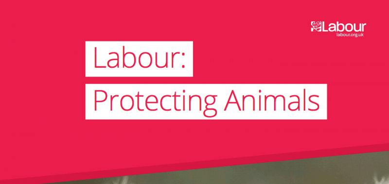 UK Labour Party Wants To Regulate Puppy Production