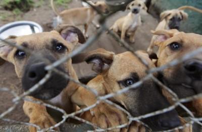 Dog Breeding In Zimbabwe