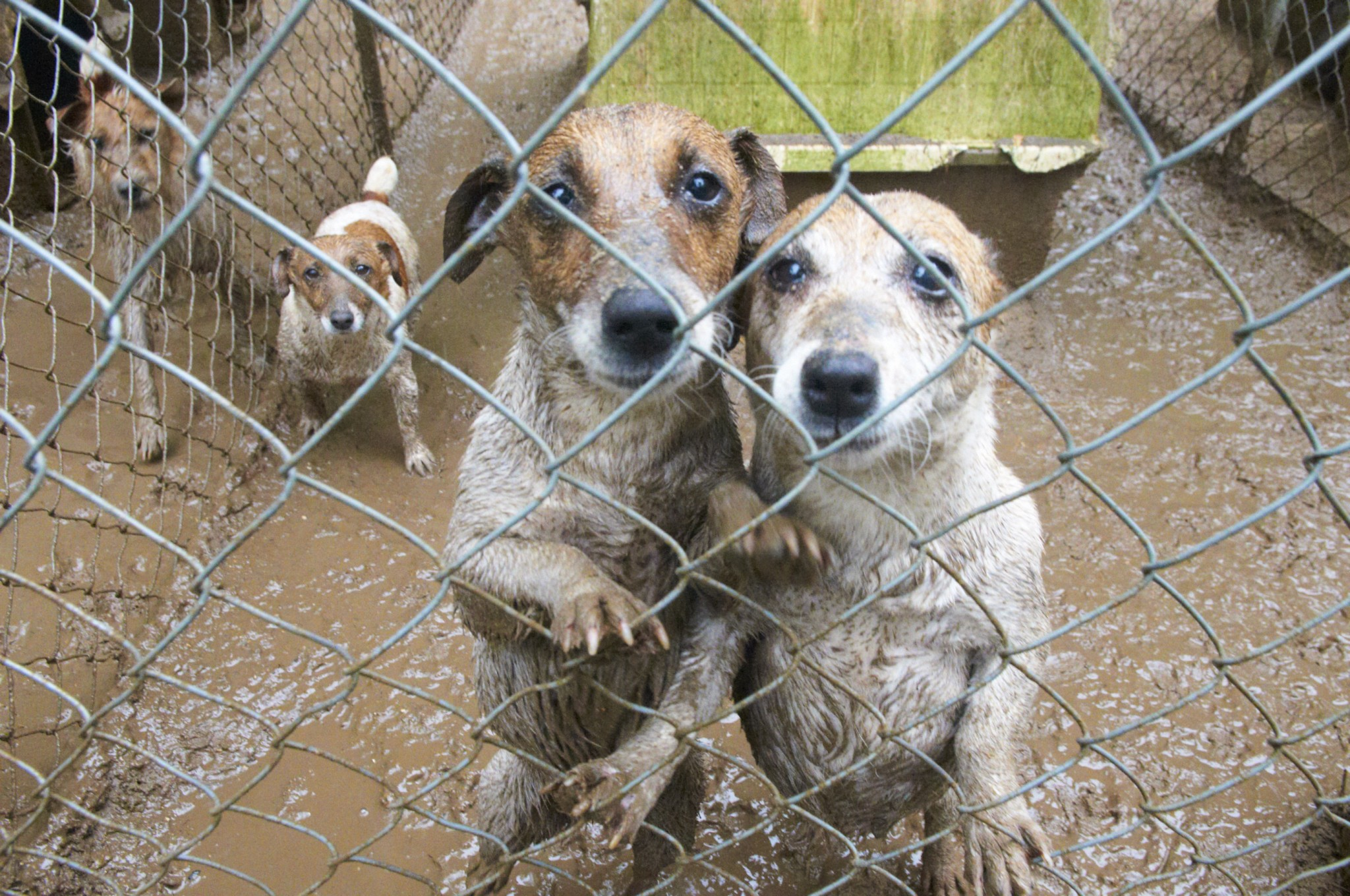 A Puppy Mill in Missaukee County