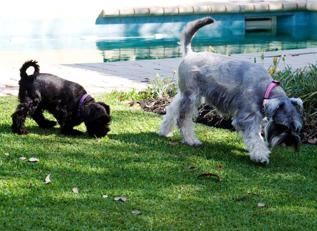Rudi and Lucy, from a past litter