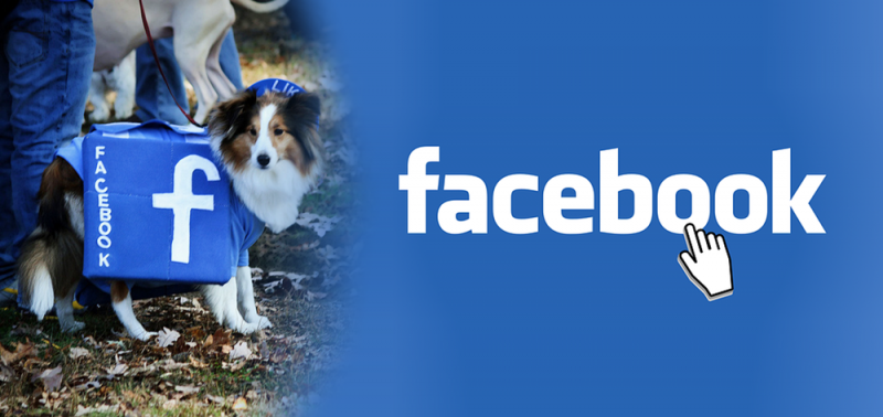 Facebook is every dog breeder's best marketing tool!