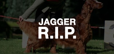 Thendara Satisfaction Jagger Death By Poison at Crufts 2015