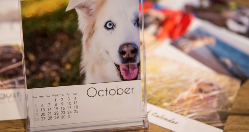 Whelping Calendar 2021 Perpetual Whelping Chart & Calculator for Dogs