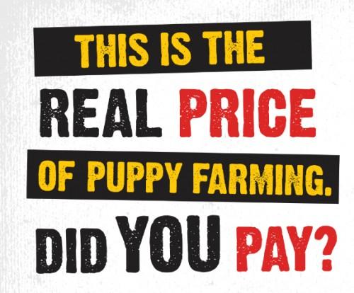 USPCA campaign against puppy farming