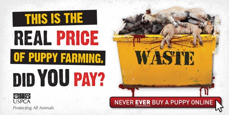 USPCA's New Anti Puppy Farming Campaign