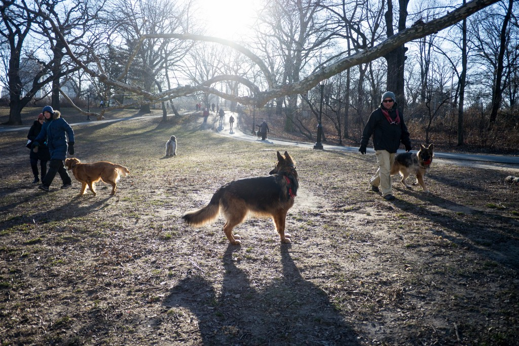 Dogs in Central Park