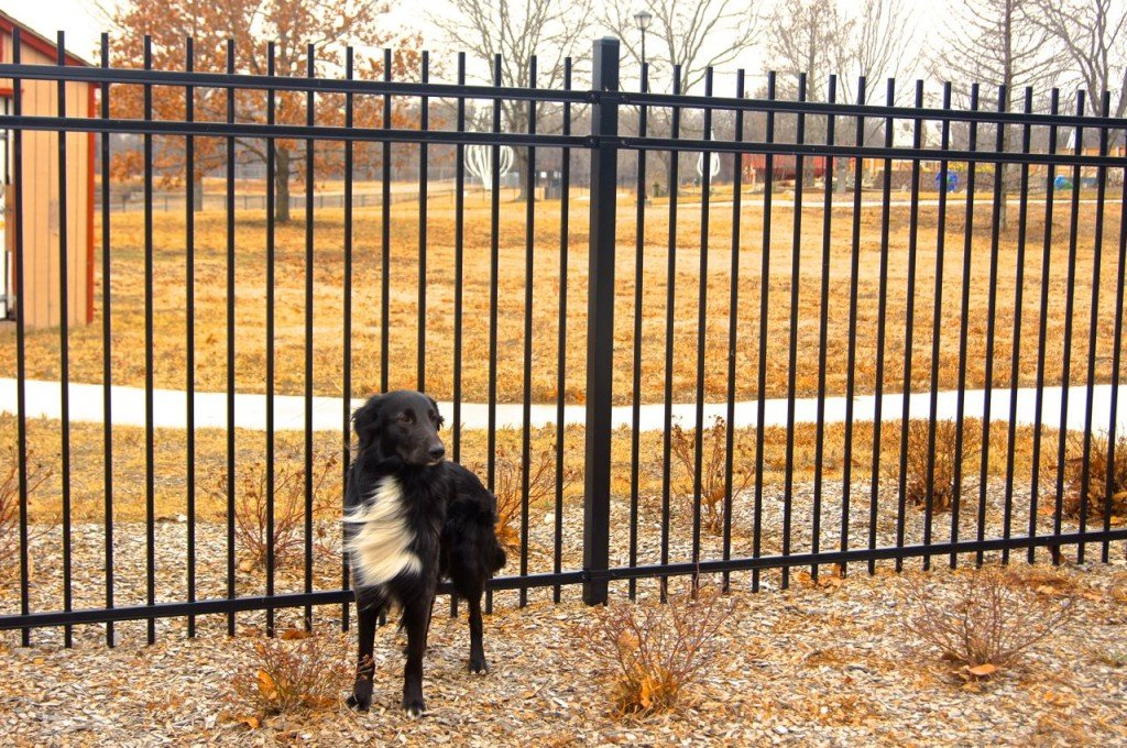 Dog fence prevent escape