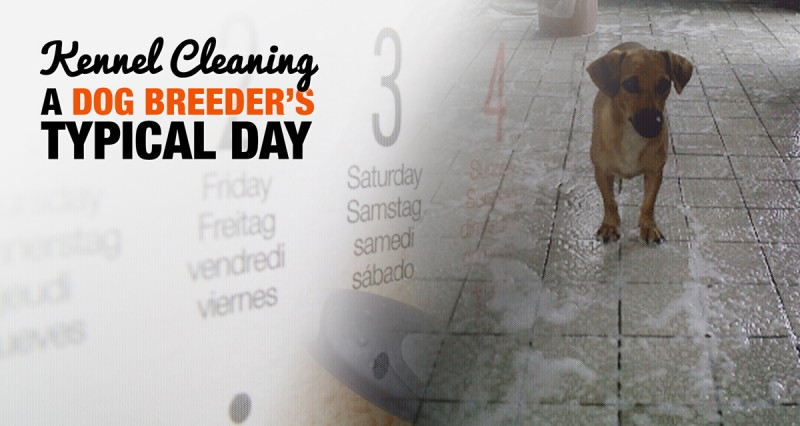 Kennel Cleaning And Disinfecting