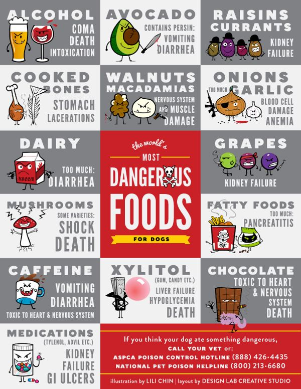 Most Dangerous Dog Foods