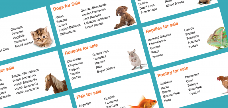Homepage of Pets4Homes: famous Classifieds Ads Website in UK