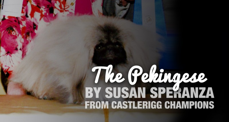 The Pekingese by Susan Speranza (Breeder of Castlerigg Champions)