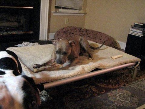 Kuranda All-Aluminum Chewproof Dog Bed XXL