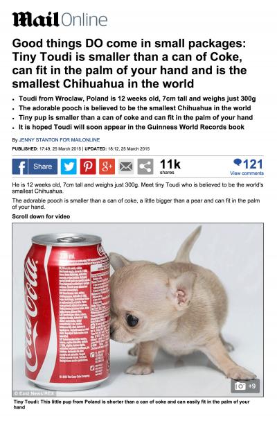 Toudi Daily Mail Chihuahua