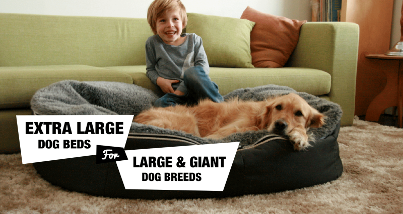 The best extra large dog beds reviewed!