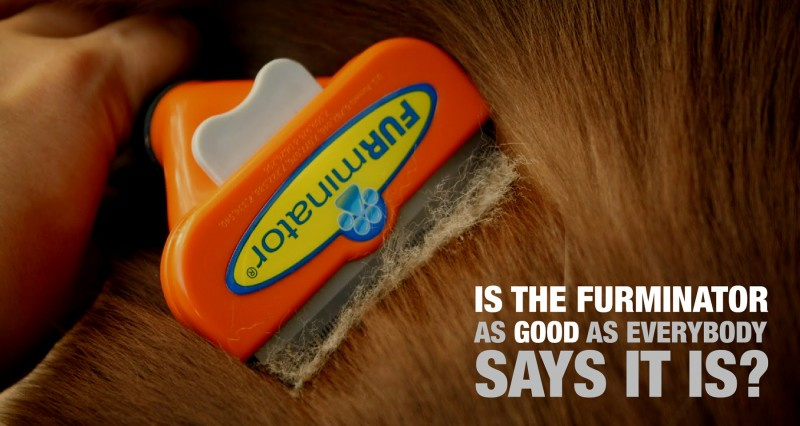Review of the FURminator Deshedding Tool For Dogs!