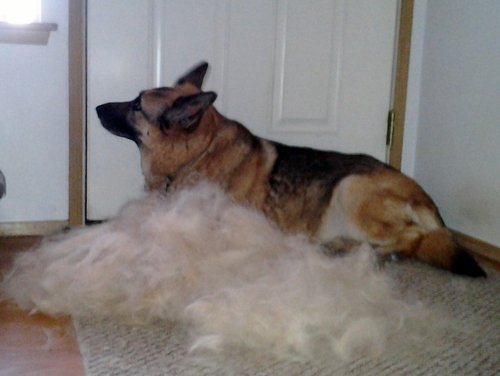 FURMINATOR EXAMPLE LOOSE HAIR