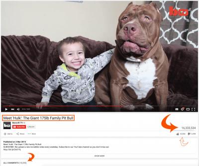 Hulk Video Youtube Pitbull