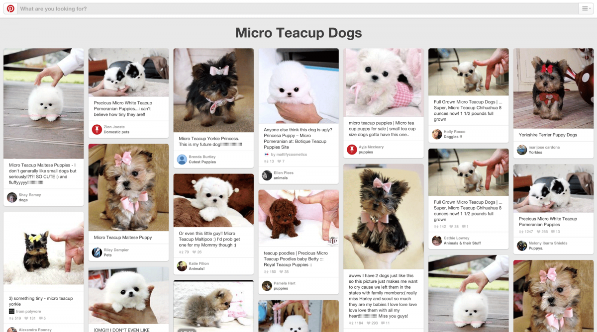 Pinterest Board Teacup Micro Dogs