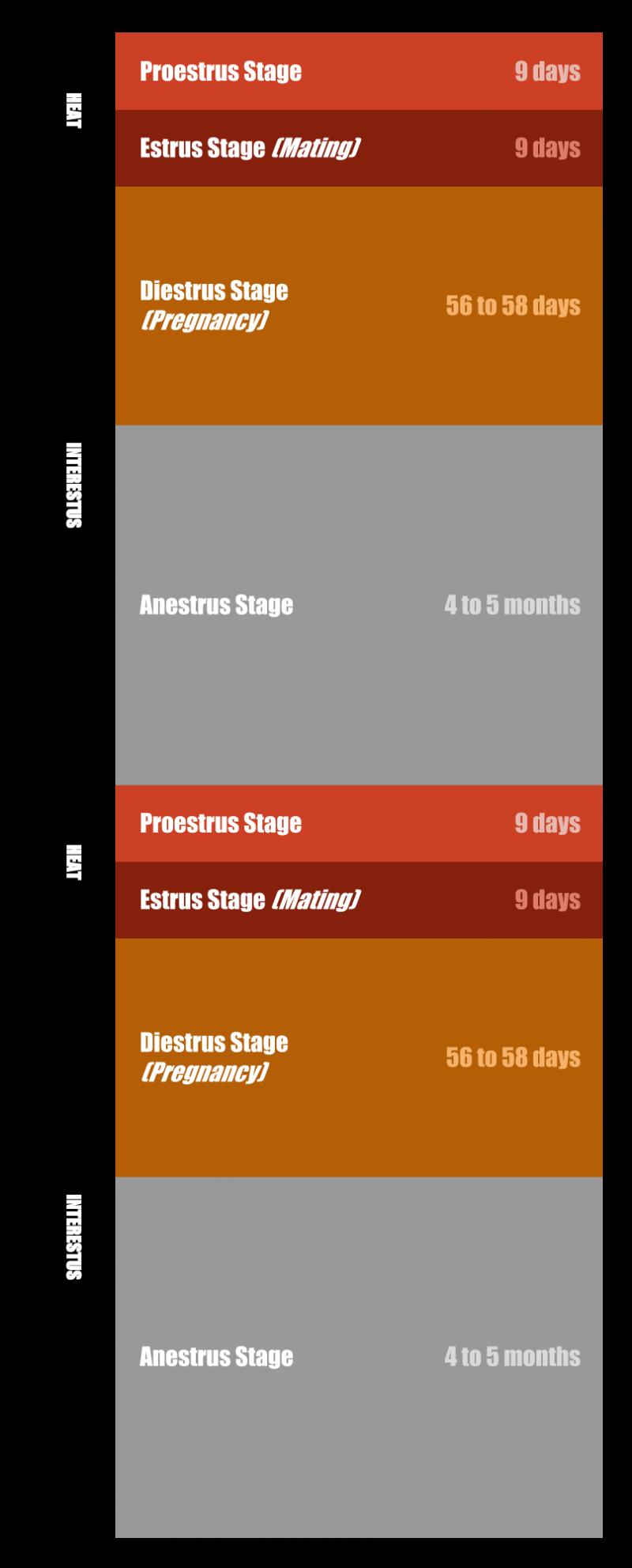 Bitch Heat Cycle Chart
