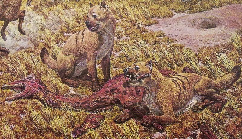 Borophagus dogs