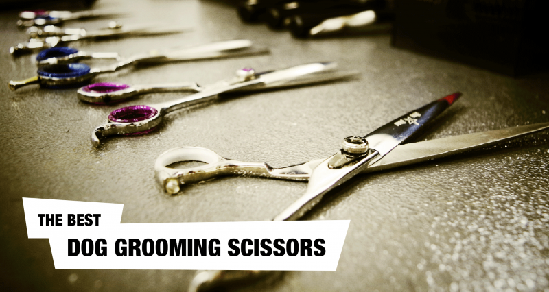 What Are The Best Pair of Dog Grooming Scissors!