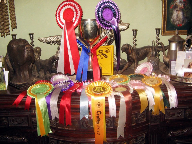 English Setter Champion Certificate