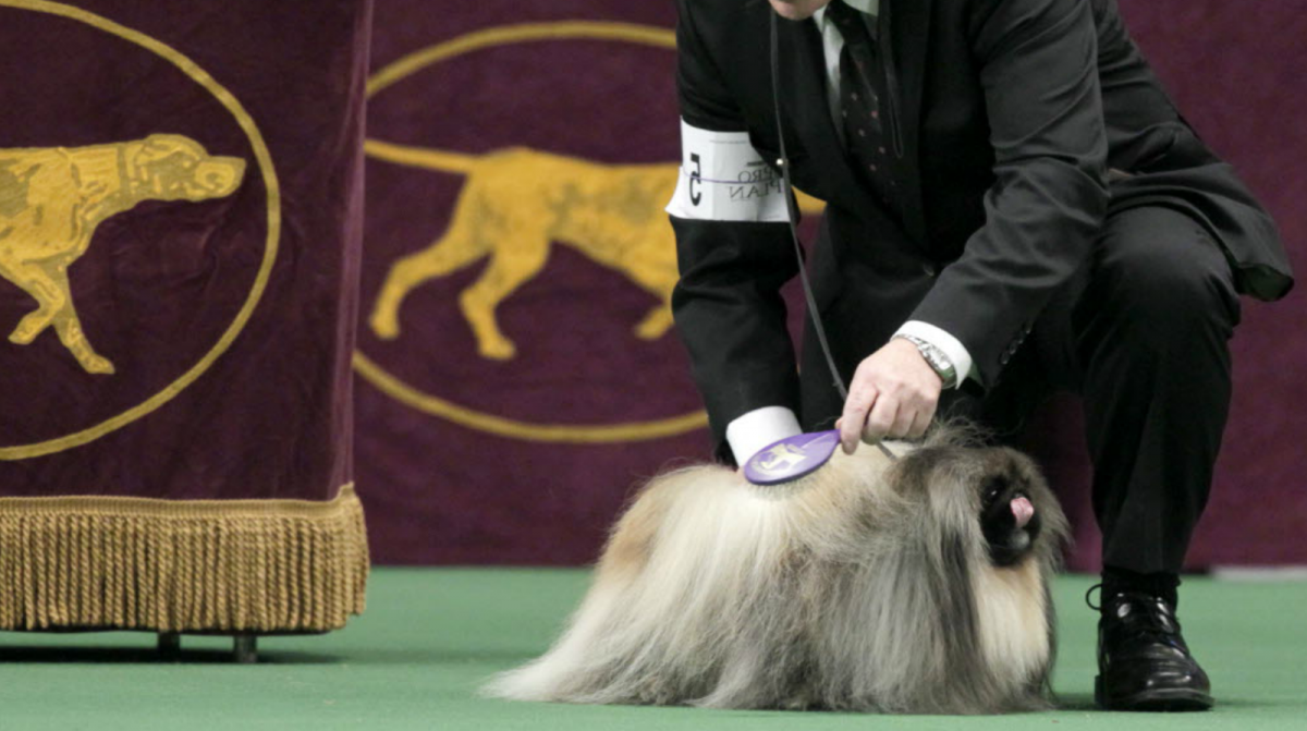 Showing dogs is not easy. More than dogs, you have to deal with judges, handlers, and a lot of drama that is always happening in the dog show world.