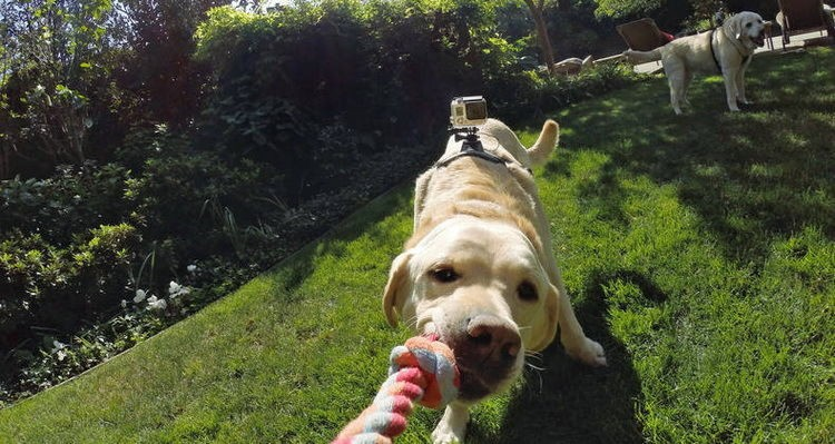 action camera go pro for dogs