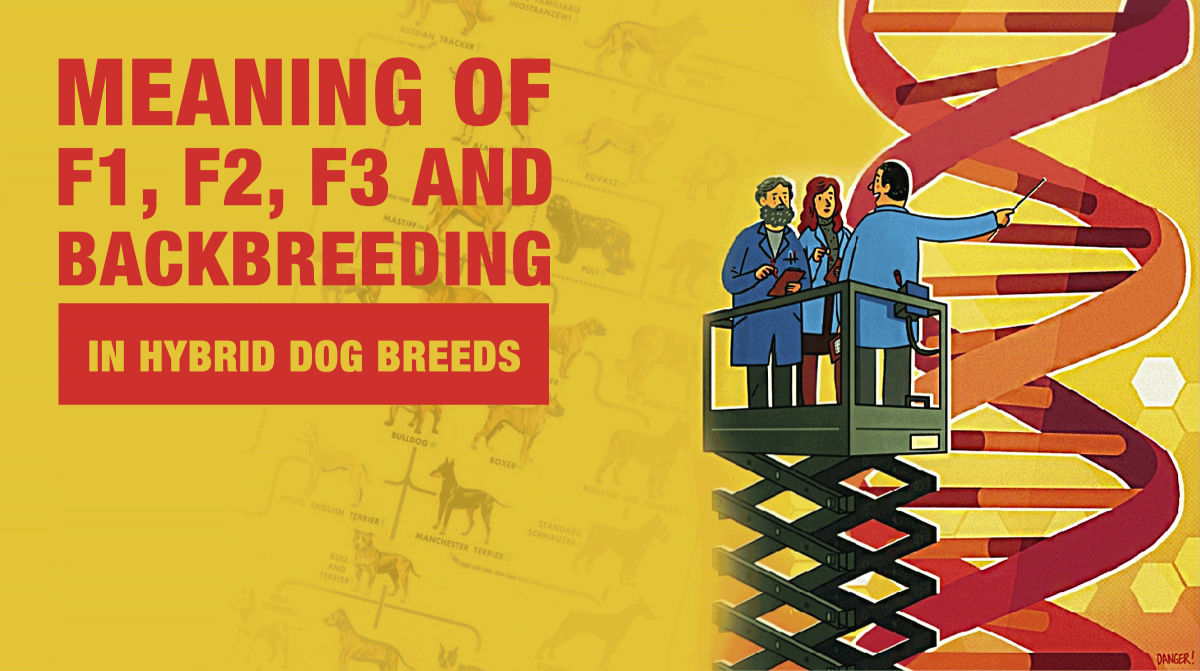 Meaning of F1, F1b... in hybrid dog breeds