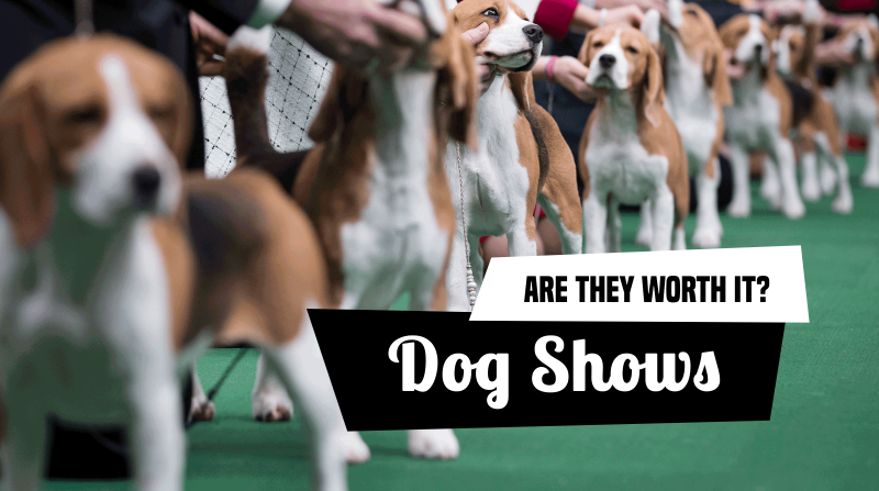 Are dog shows worth participating