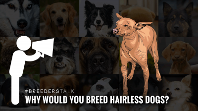 breeding hairless dog breeds