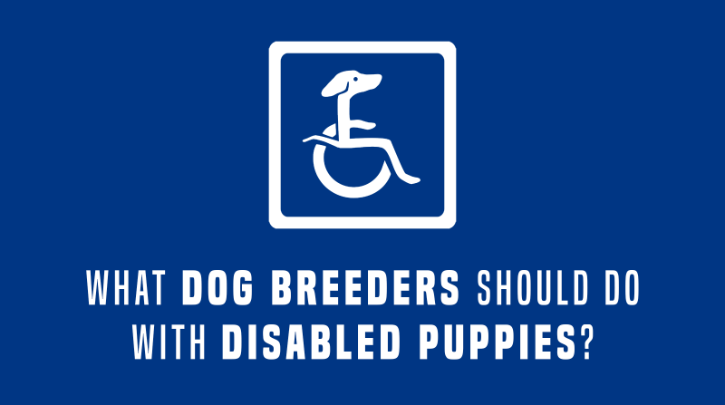 dog breeders and disabled dogs