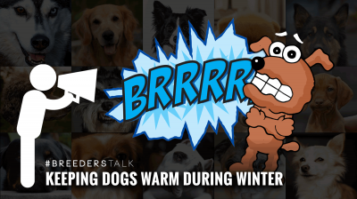 Breeders talk about keeping dogs warm during subzero and coldest days