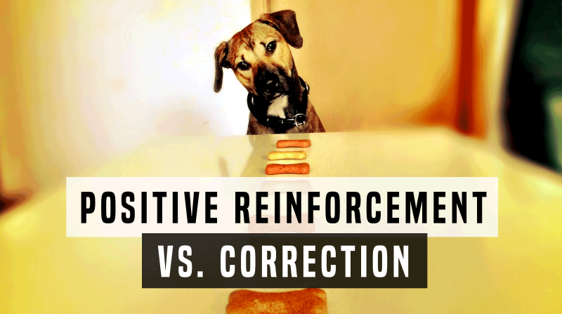 Positive Reinforcement vs. Correction