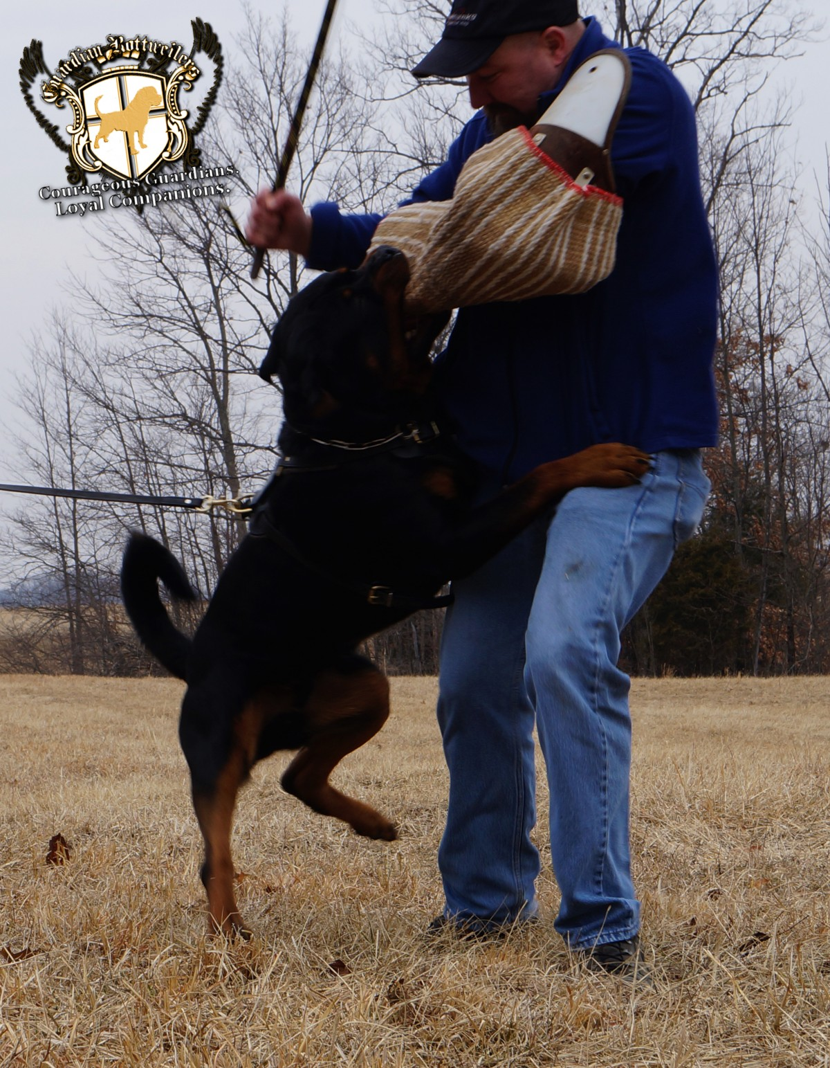 Guardian Rottweilers Ocho protection