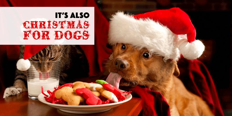 christmas dog treats and dog christmas dinner