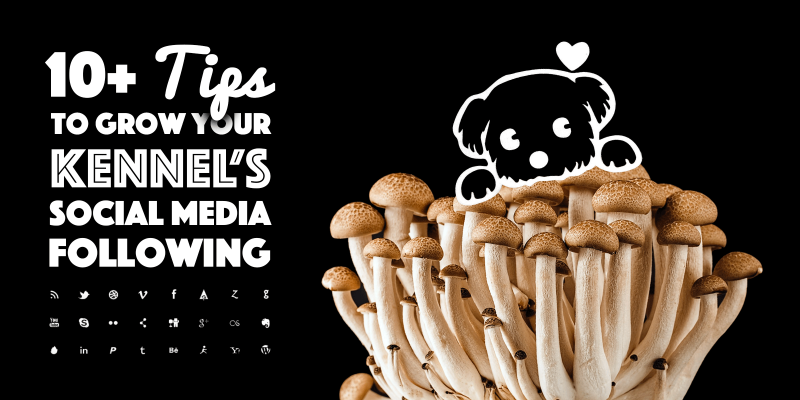 10 tips to grow your social media audience