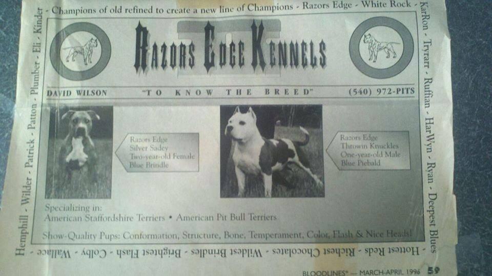 Razors Edge pitbull amstaff 1996