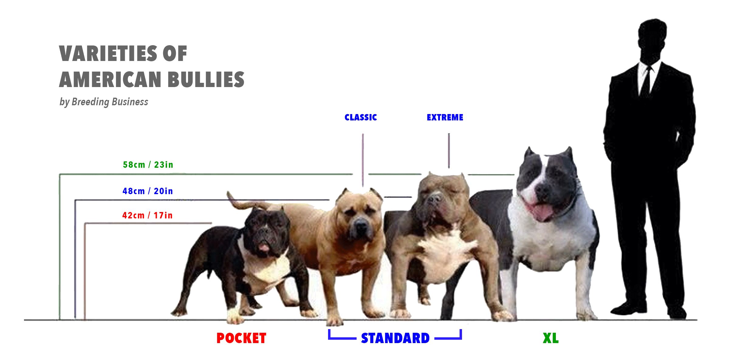 The Different Types of American bullies