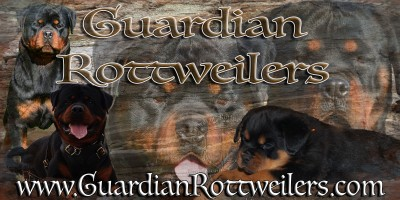 Interview with Alice — breeder from Guardian Rottweilers