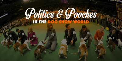 Politics & Pooches in the dog show world.