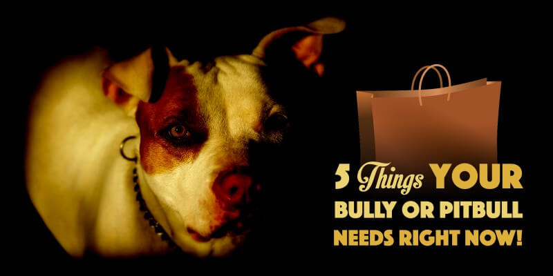 top american bully and pitbull supplies