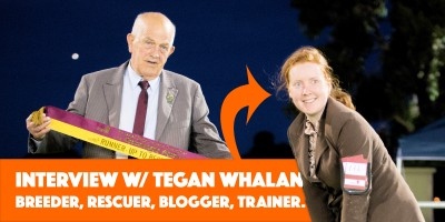 Interview with Tegan Whalan, blogger, dog breeder, dog rescuer, trainer