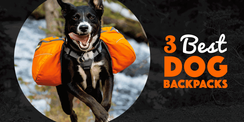 best dog backpacks for hiking and trekking