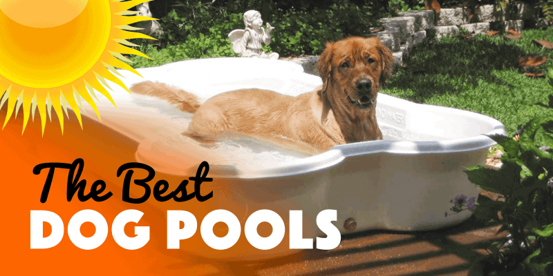 best dog pools (inflatable, foldable)