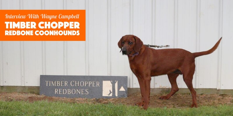 coonhound breeder wayne campbell from timber chopper kennels