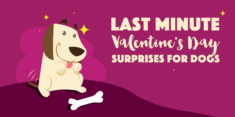 Valentine's Day For Dogs
