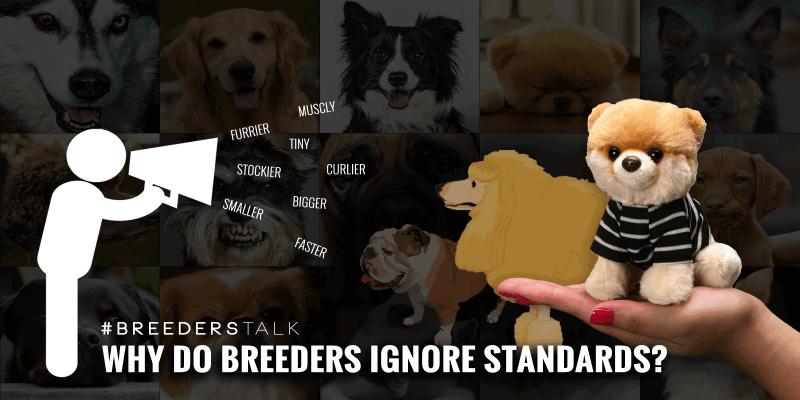 dog breeders kennel club standards